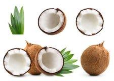 Noce di cocco isolata Immagine Stock Libera da Diritti