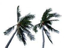 Noce di cocco isolata delle coppie Fotografia Stock Libera da Diritti