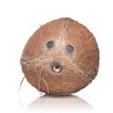 Noce di cocco isolata su bianco Fotografia Stock Libera da Diritti