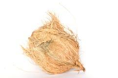 Noce di cocco isolata su bianco Immagine Stock