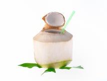 Noce di cocco isolata su fondo bianco Immagini Stock Libere da Diritti
