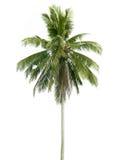 Noce di cocco isolata su fondo bianco Fotografie Stock Libere da Diritti