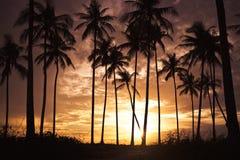 Noce di cocco leggera del mare di mattina Fotografia Stock Libera da Diritti