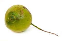 Noce di cocco nella priorità bassa bianca Fotografia Stock