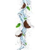 Noce di cocco nella spruzzata dell'acqua Immagini Stock