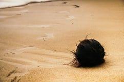 Noce di cocco nera sulla sabbia Immagini Stock
