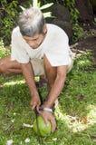 Noce di cocco Nicaragua di taglio del machete dell'uomo Immagine Stock Libera da Diritti