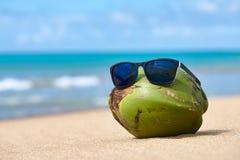 Noce di cocco in occhiali da sole Fotografia Stock Libera da Diritti