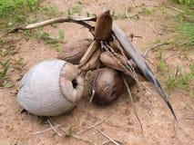 Noce di cocco organica fresca di Brown Fotografia Stock