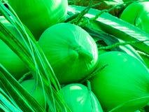 Noce di cocco piacevole all'albero con la foglia Immagini Stock Libere da Diritti