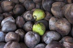 Noce di cocco secca Fotografia Stock Libera da Diritti