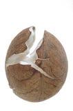Noce di cocco senza coperture Fotografia Stock Libera da Diritti