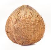 Noce di cocco su fondo bianco Immagini Stock Libere da Diritti