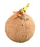 Noce di cocco su fondo bianco Fotografia Stock