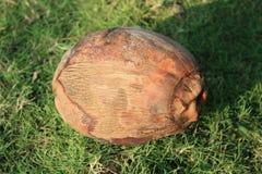 Noce di cocco su erba verde Fotografia Stock Libera da Diritti