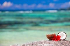 Noce di cocco sul litorale tropicale Immagini Stock