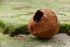 Noce di cocco sulla costa del Na Pali Fotografia Stock Libera da Diritti