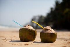 Noce di cocco sulla spiaggia tropicale Fotografia Stock Libera da Diritti