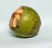 Noce di cocco verde Fotografia Stock