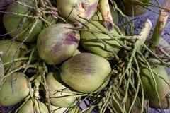 Noce di cocco verde cruda Fotografia Stock