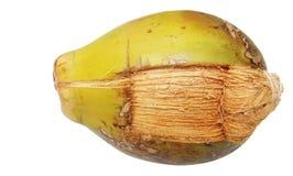 Noce di cocco verde parzialmente pealed Fotografie Stock Libere da Diritti