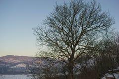 Noce di inverno Fotografie Stock