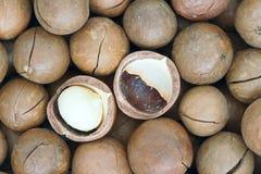 Noce di macadamia Fotografia Stock Libera da Diritti