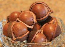 Noce di macadamia in bucce Fotografie Stock