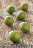 Noce di macadamia in buccia Fotografie Stock Libere da Diritti