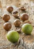 Noce di macadamia in buccia e nelle coperture Fotografia Stock