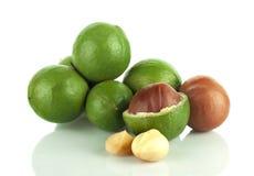 noce di macadamia su fondo bianco Fotografia Stock Libera da Diritti