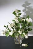 Noch Leben Blumenstrauß des blühenden Jasmins Lizenzfreie Stockfotografie