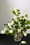 Noch Leben Blumenstrauß des blühenden Jasmins Lizenzfreies Stockbild