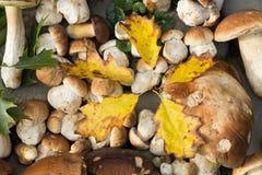 Noch Leben der Pilze Stockbild