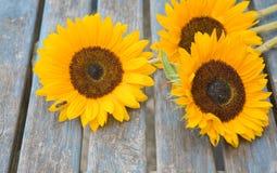Noch Leben mit den Sonnenblumen draußen eingestellt Lizenzfreie Stockfotografie