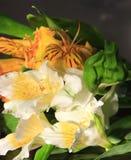 Noch Leben mit flover, gemalter Leuchtepinsel Stockbild