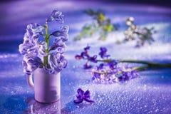 Noch Leben mit Hyazintheblume im leichten Veilchen Lizenzfreies Stockfoto