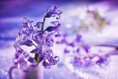 Noch Leben mit Hyazintheblume im Veilchen Stockfoto