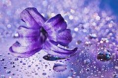 Noch Leben mit Hyazintheblume im Veilchen Stockbild