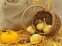 Noch Leben mit Kürbis, Korb, Zwiebel und Muttern Stockbild