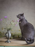 Noch Leben mit Katze Lizenzfreie Stockfotos