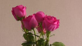 Noch Leben mit Rosen stock footage