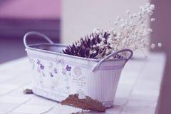 Noch Leben mit trockenen Blumen Stockbilder