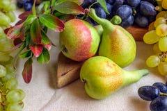 Noch lebens- helle Frucht auf hellem Gewebe Weinlese Schwarzes und gre Stockbild