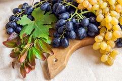 Noch lebens- helle Frucht auf hellem Gewebe Weinlese Schwarzes und gre Lizenzfreies Stockbild