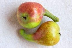 Noch lebens- helle Frucht auf hellem Gewebe Zwei ungewöhnliche Birne - Cl Stockbilder