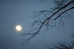 Noche Imagen de archivo
