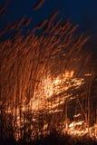 Noche ardiente de las cañas Imagen de archivo libre de regalías