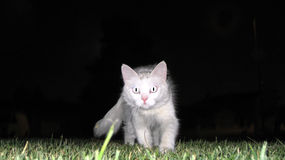 Noche blanca del gato   Foto de archivo