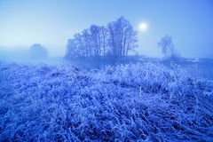 Noche brumosa del invierno del claro de luna Nieve y helada en hierba Imagenes de archivo
